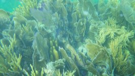 Biscayne Corals