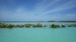 Shroud Cay mangroves