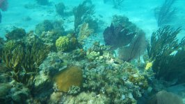Corals at the Crooked Island