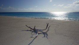 Driftwod at West Plana Cay Beach