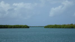Mangroves of Jobos