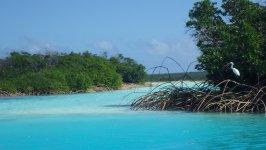 Conception Island Lagoon Bahamas
