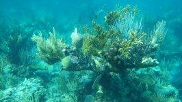 Pelican Cays Sea Park Corals