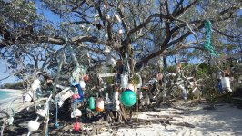 Allans Pensacola Siginig Tree Bahamas